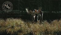 Autumn Foraging - Moose