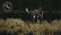 Autumn Foraging - Moose
