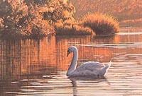 Morning on the Lagoon