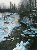 Winter Creek and Whitetails